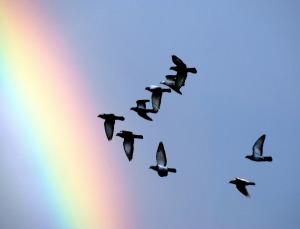 pigeons-1333865_1920